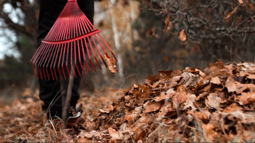 Ezt az 8 dolgot mindenképp csináld meg a kertben: itt a novemberi feladatlista