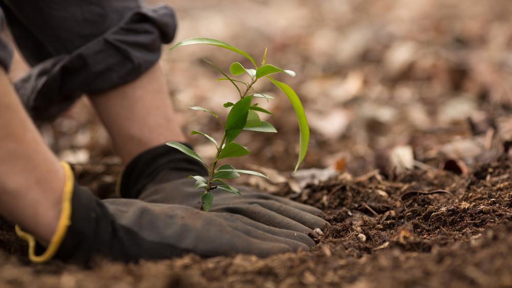 Elkezdődött az Országfásítási Program: 550 hektárnyi új erdőt telepítenek
