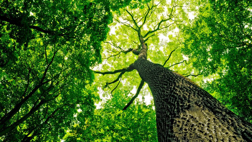 Ettől Greta Thunberg padlót fogna: ennyit érne, ha minden ember ültetne egy fát
