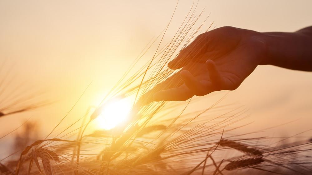 Súlyos megállapítás született: elpusztítja a természetet az intenzív mezőgazdálkodás