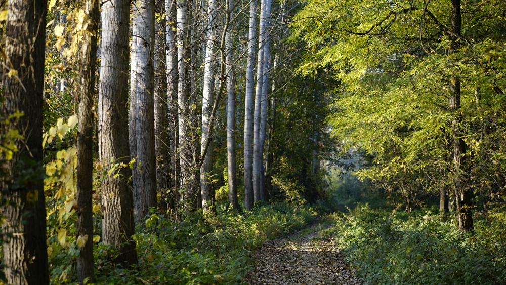 Milliárdos támogatás: így vehetik igénybe az erdőtelepítők
