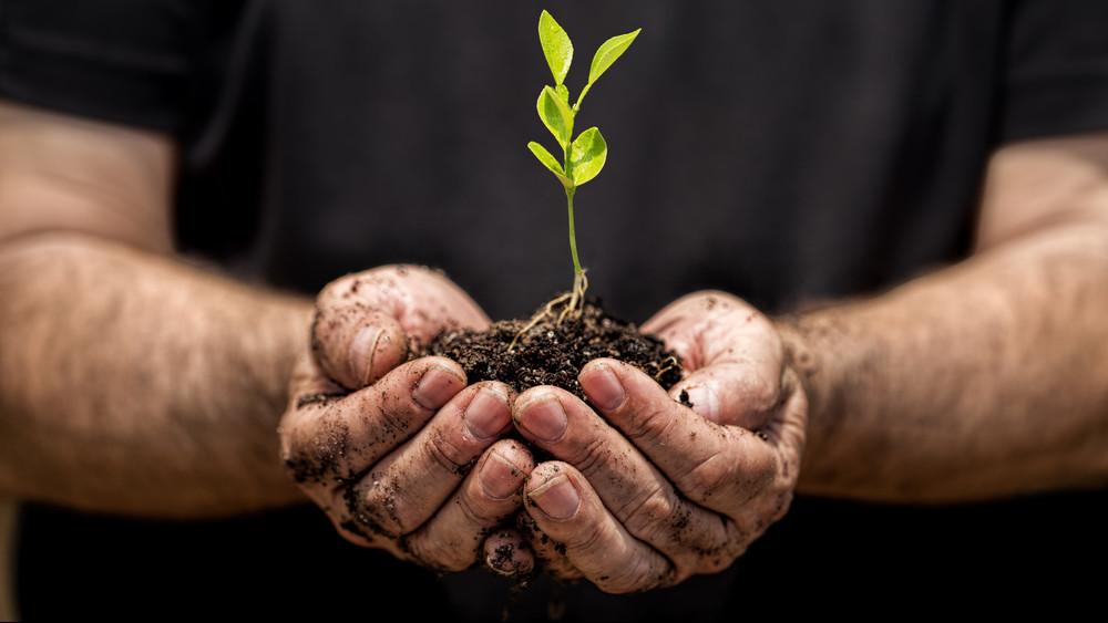 Súlyos dolog derült ki a bioélelmiszerekről: óriási kamu, hogy mind toxinmentes