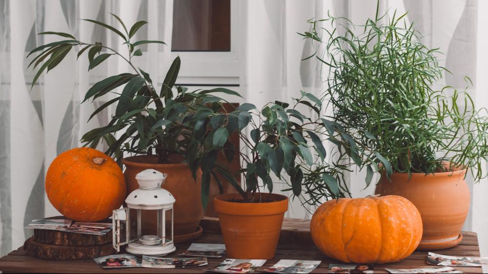 Így mássz ki az őszi depresszióból: el se hinnéd, mire képesek ezek a növények