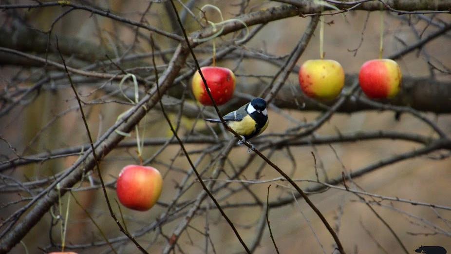 Téli madárvédelem: kövér cinkék napja a Budakeszi Vadasparkban