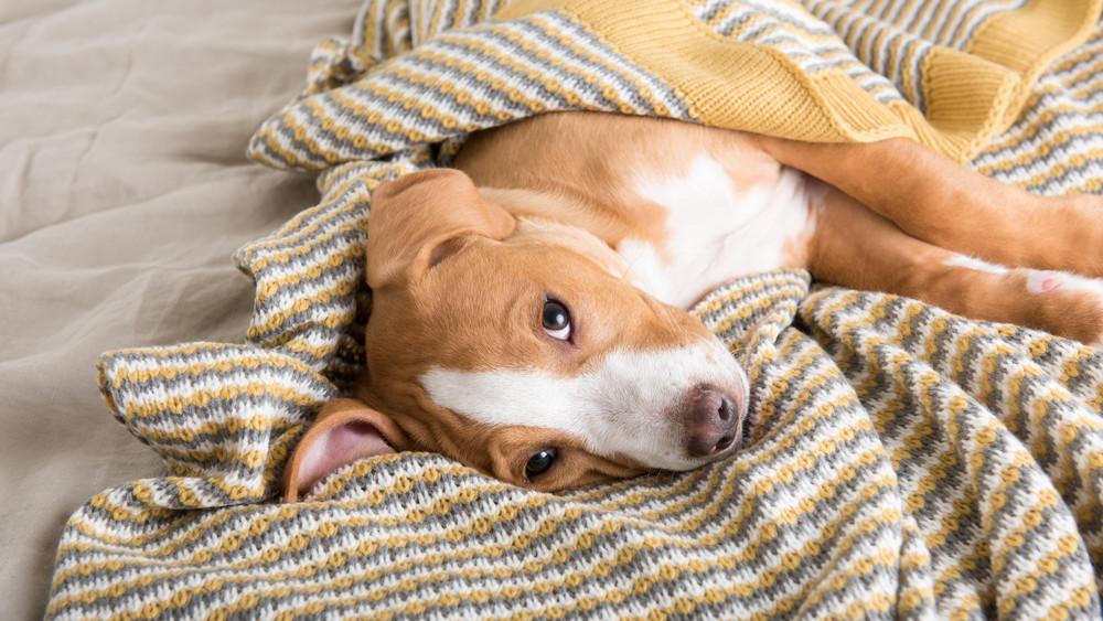 Ezt nagyon sok kutyatulajdonos elrontja: így vigyázz házi kedvencedre ősszel és télen!