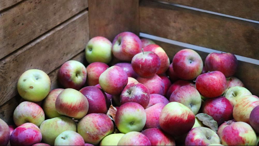Kevés és drága lett az idei alma: kifakadtak a gazdák az áruházi akciókra