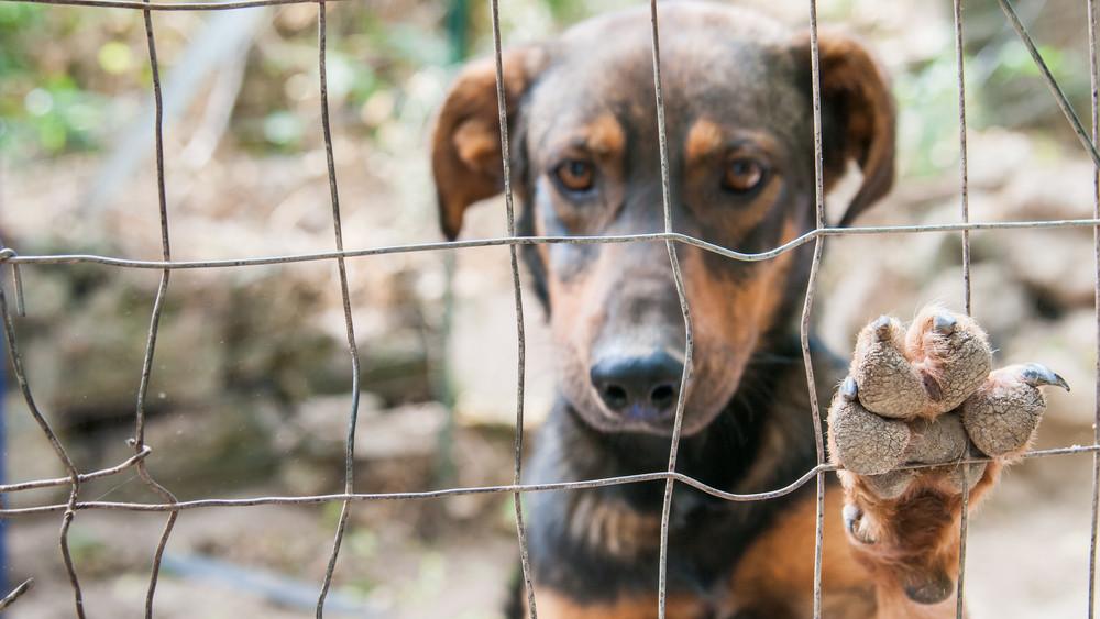 Embertelen körülmények: horrorfilmbe illő környezetben tartották a kutyákat