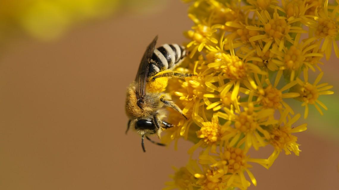 Újabb területen kezdődik ültetés: méheknek is jól jöhet a fásítási program