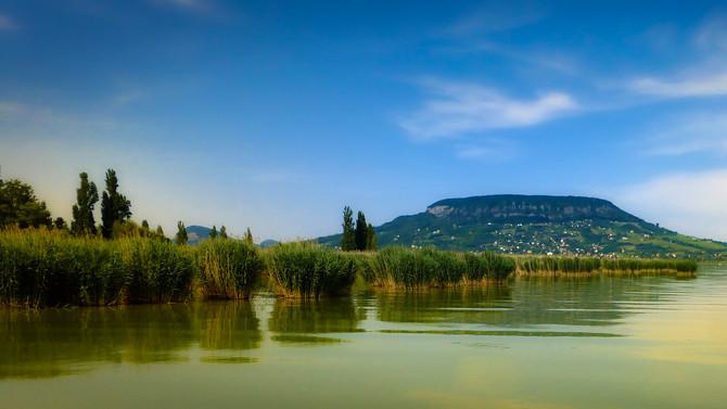 Veszélyben a Balatoni élővilág: visszafordíthatatlan következményeket okozhat a nádirtás