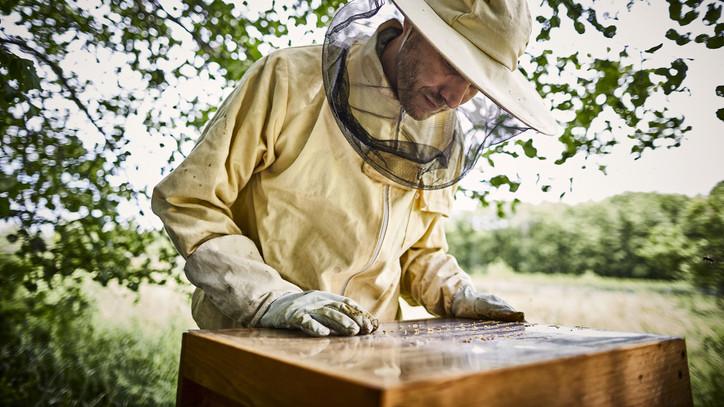 Megkongatták a vészharangot: válságban az európai méhészet