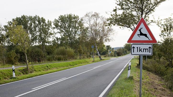 Egyre több a vadbaleset: főként őzekkel ütköznek az autósok