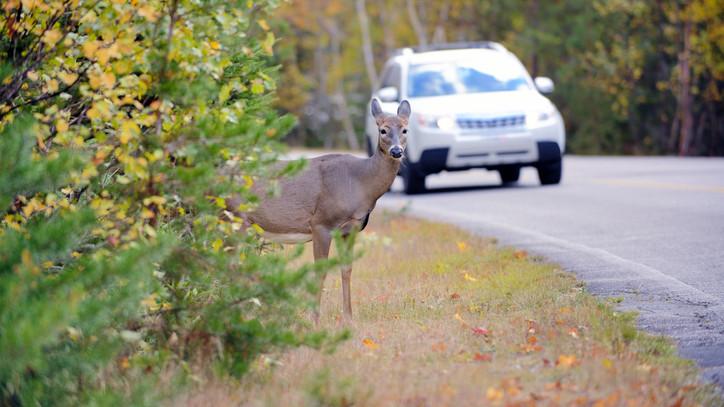 Besegített egy őz: így bukott le az ittas sofőr