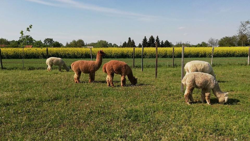 Kevesen tartanak ilyen állatot Magyarországon: ez lehet a jövő nagy befektetése?
