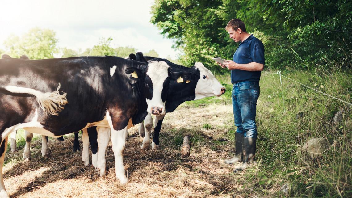 Ez a magyar mezőgazdaság egyik húzóágazata: rengeteg támogatást kapnak a gazdák