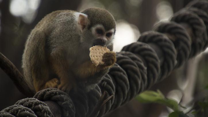 Állati tréning: így tanulnak az állatok a Budakeszi Vadasparkban + videó