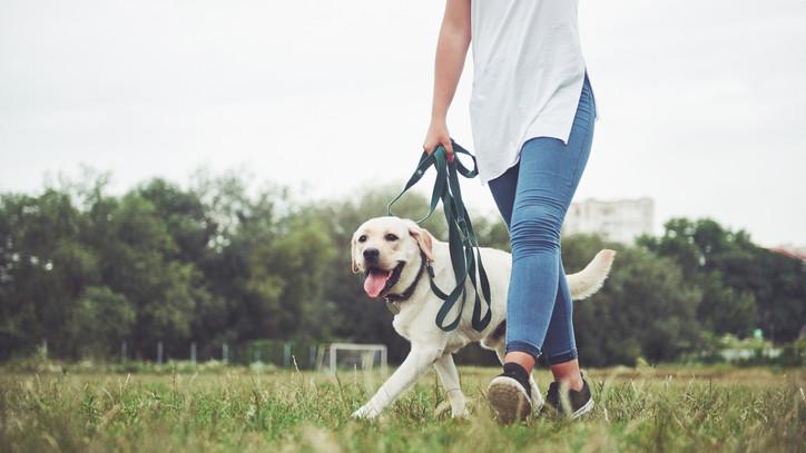 Négylábú magyar siker: európa-bajnok lett a tatabányai kutya