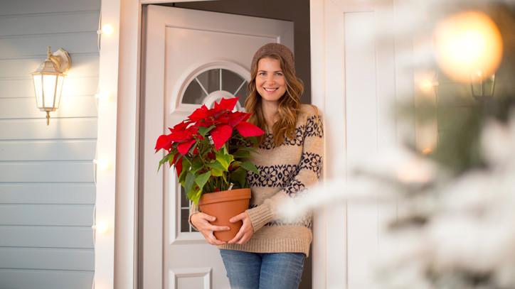 Idén sem maradhat el: mutatjuk, hol veheted meg a magyarok kedvenc téli virágát