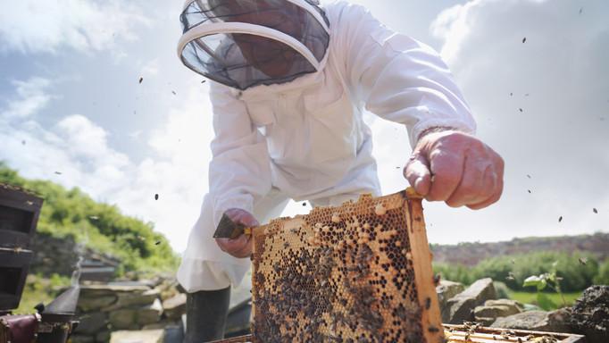 Nem örülnek a méhészek: rohamosan csökken a méz ára