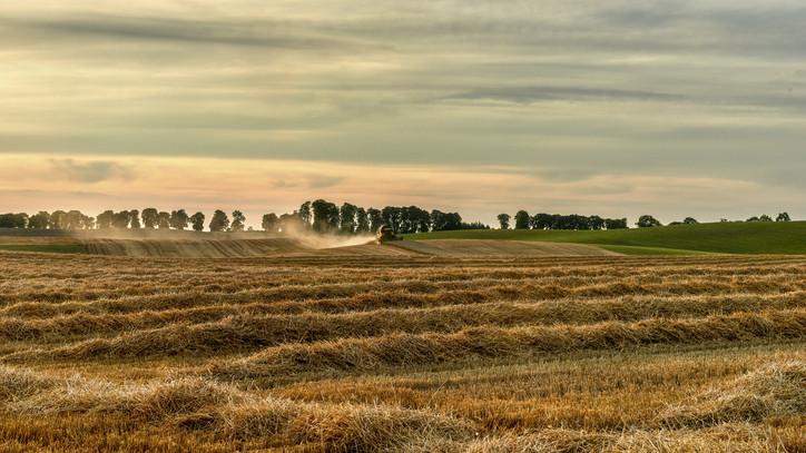 Kimagasló eredmény Zalában: itt a legnagyobb a búza és a kukorica termésátlaga