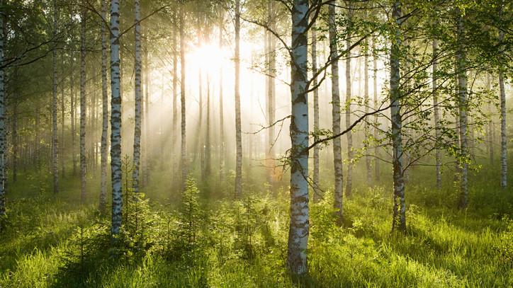 Még több pénzt szánnak erdőfejlesztésre: itt vannak a részletek