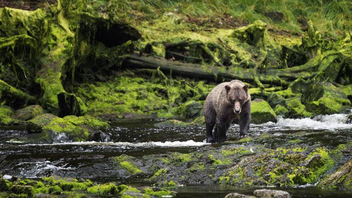 Nem várt látogató: medve bukkant fel az Aggteleki Nemzeti Park területén + VIDEÓ