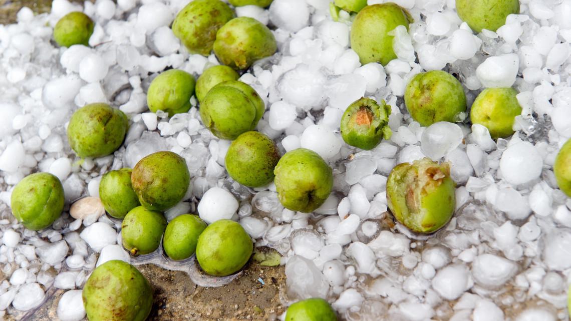 Így verték át az élelmes gazdák a szeszélyes időjárást: sokat segített jégkármérséklő-rendszer