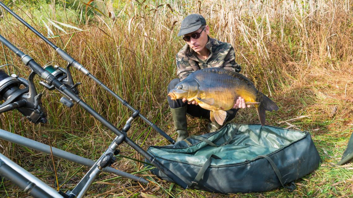 Sorra lopják a halakat a magyar tavakból: 800 ezret is érhet egy gigantikus példány