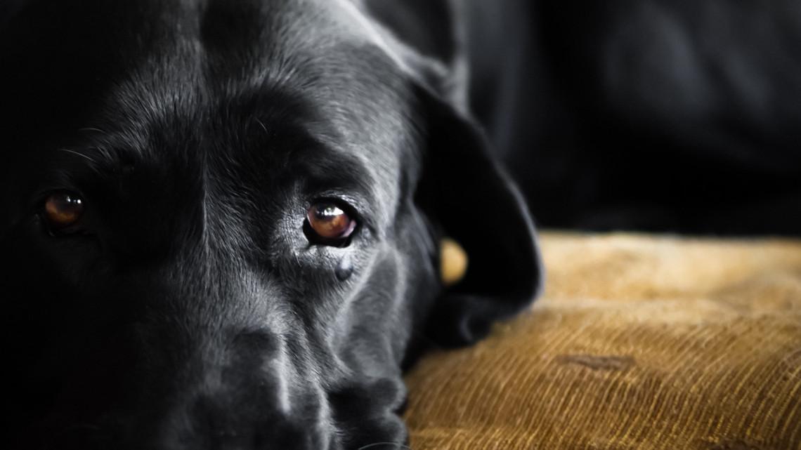 Brutális kutyakínzás Vácon: megverték és az aszfalton vonszolták végig a szerencsétlen állatot
