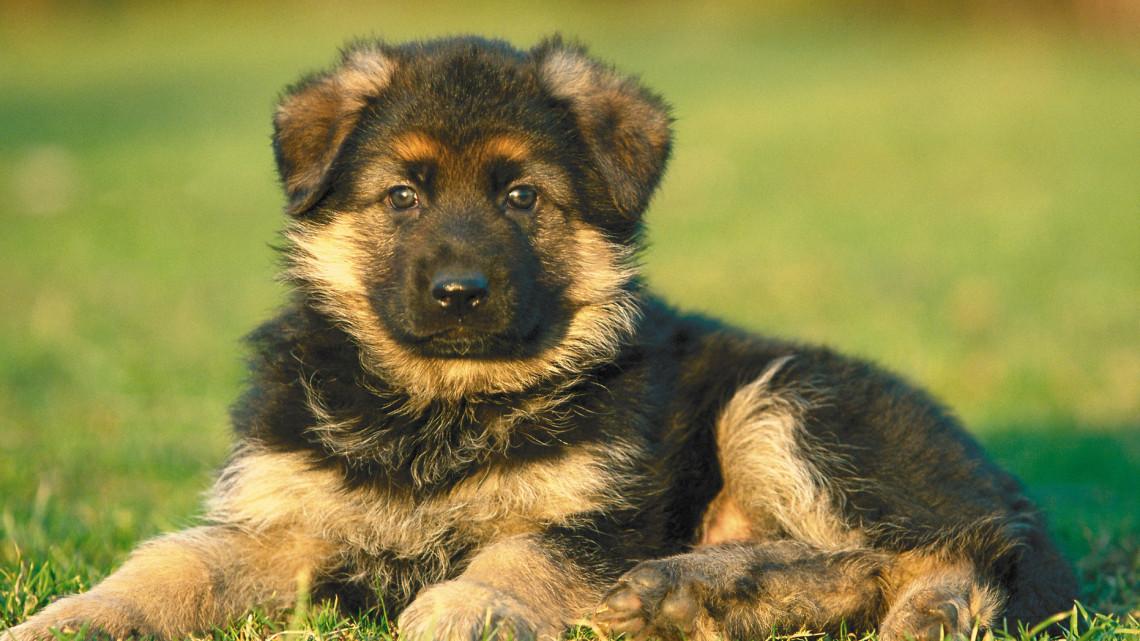 Felfoghatatlan: 9 kutyát vertek agyon és dobtak a konténerbe Jászberényben