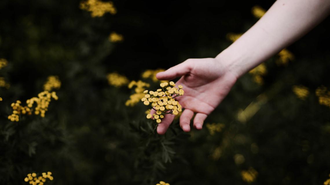 Jó hír a termelőknek: így támogatják a gyógynövényipart
