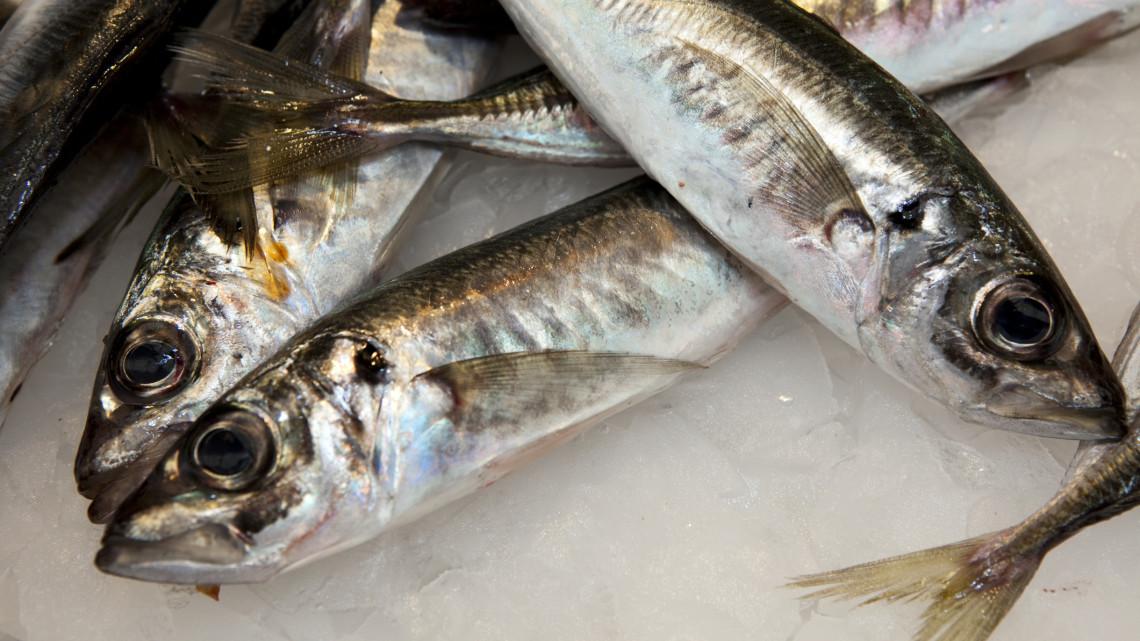 Drága lesz idén a karácsonyi menü: mutatjuk, mennyibe kerül a hal a boltokban
