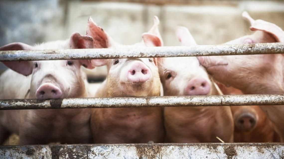 Egekben a sertéshús ára: most kiderül, miért adják ilyen drágán a kereskedők