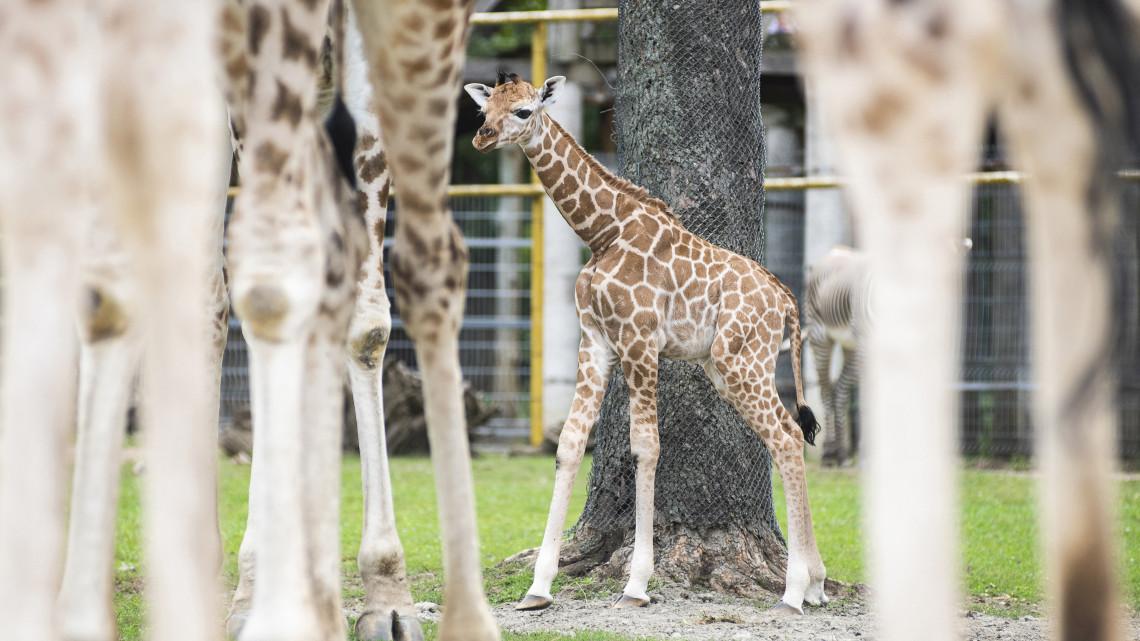 Kihagyhatatlan program: féláron látogatható év végén ez a vidéki állatkert