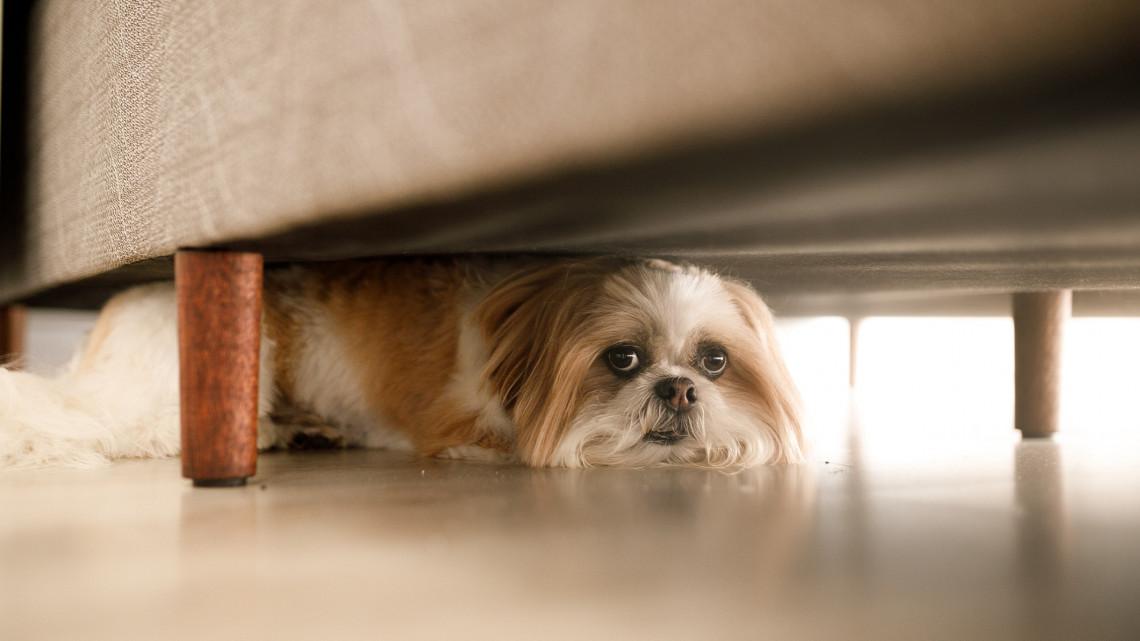 Kutyák ezrei kóborolnak el minden évben: így vigyázz házi kedvencedre szilveszterkor!
