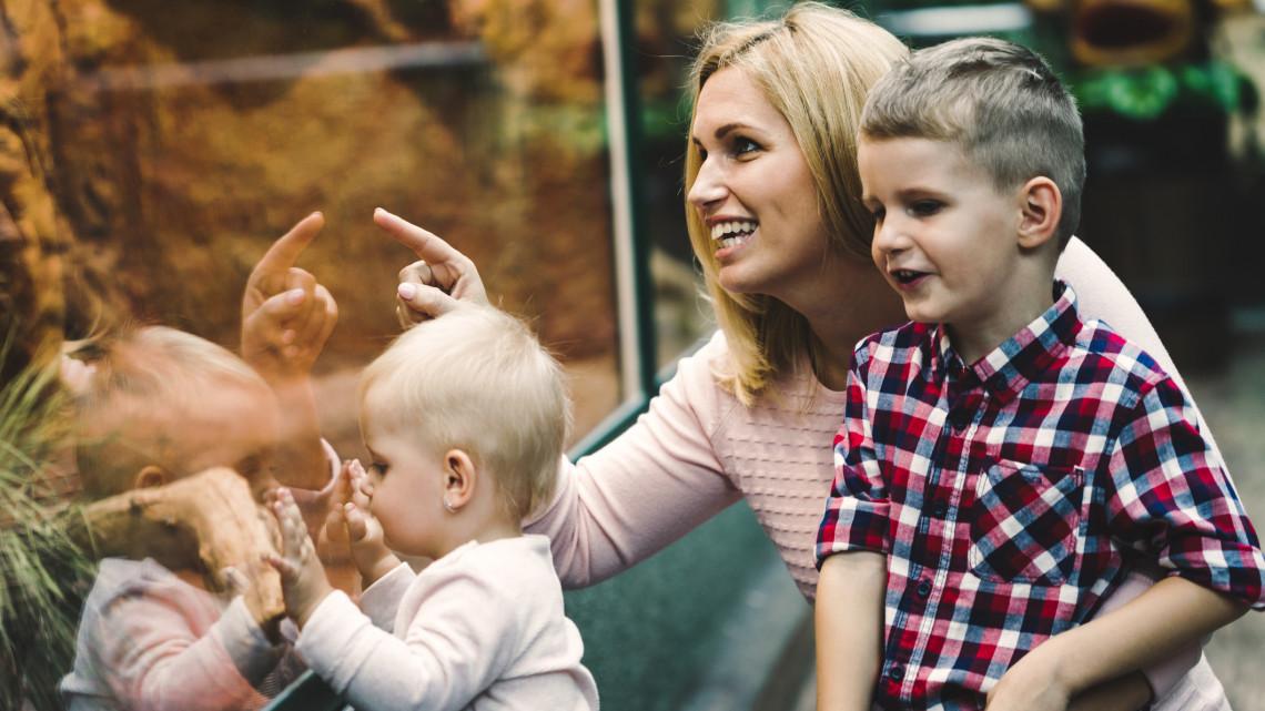Hétvégén kinyitott a győri állatkert is: egyelőre védettségi igazolvánnyal látogatható