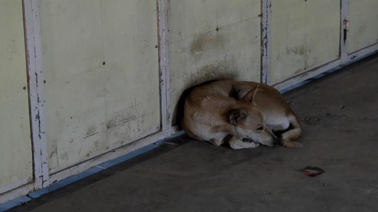 Gázolások szilveszter este: rengeteg állatot elütöttek
