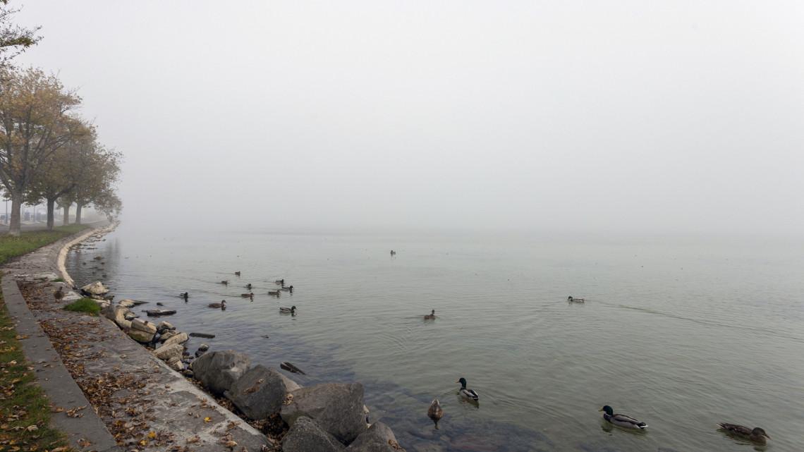 Ez hihetetlen: még Ausztráliából is érkeztek csobanni a fagyos Balatonba
