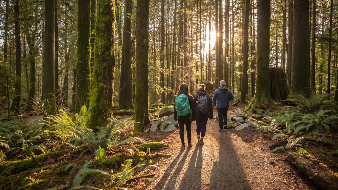 Túrázók figyelem: látogatási korlátozás a népszerű erdei úton