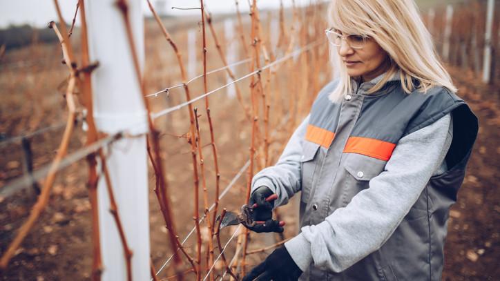 Ezeket a kerti munkákat mindenképp végezd el januárban: itt a 6 pontos feladatlista