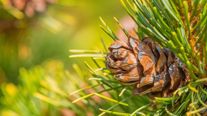 Súlyos veszély leselkedik a magyar erdőkre: végleg eltűnhet ez a fafajta?
