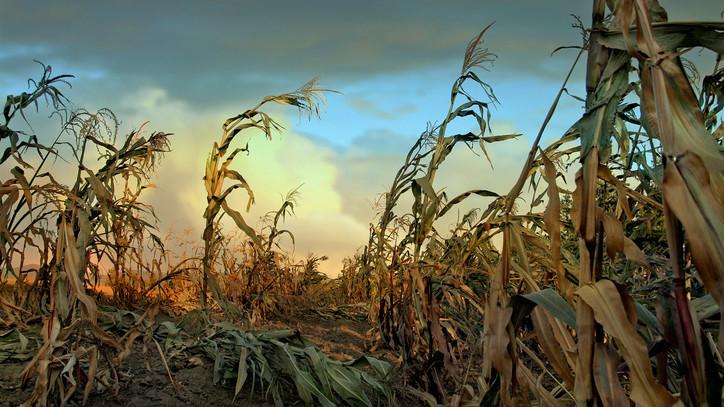 Jó hír a gazdáknak: új technológia segíthet az aszály leküzdésében