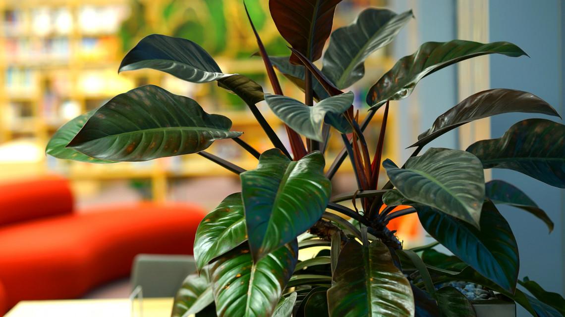 17 dolog, amit feltétlenül tudnod kell, ha te is szobanövényt tartasz otthon