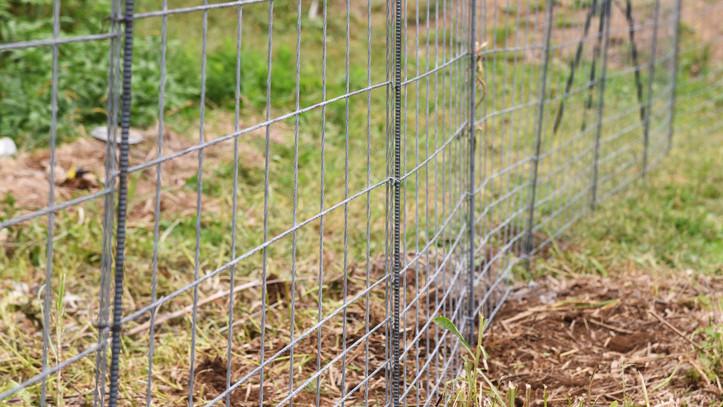 Nem várt látogatók: hatalmas károkat okoznak a vadak a balatoni településeken