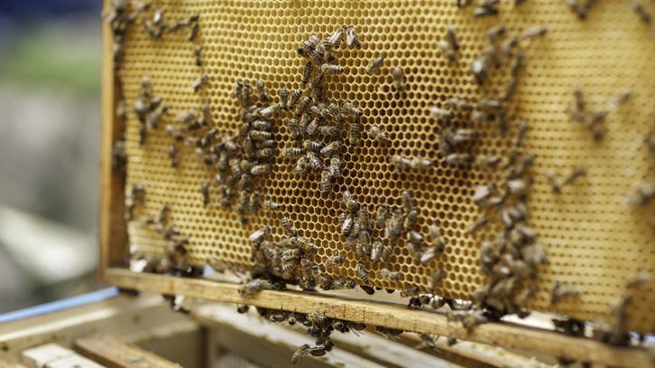 Aggódnak a gazdák: nem zártak jó évet a méhészek