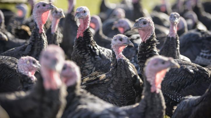 Támad a madárinfluenza: ebben a megyében ütötte fel a fejét