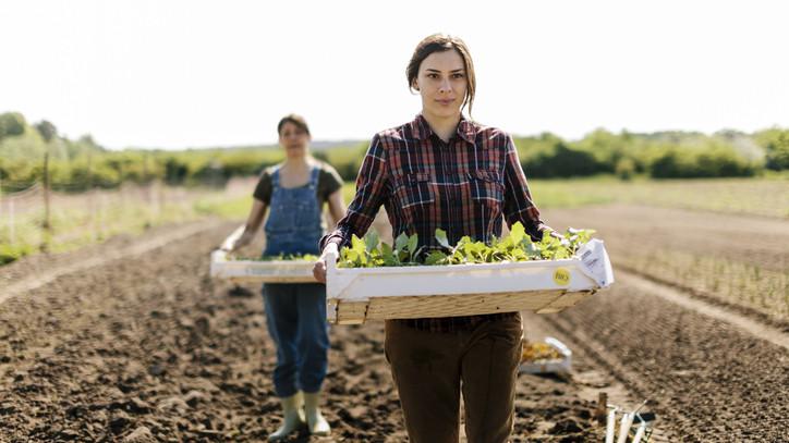 Örülnek a gazdák: ezért zárt jó évet a magyar agrárium