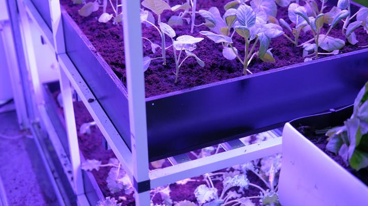 Így nevelj beltéri növényeket: ez a legnagyobb kertészek egyszerű trükkje
