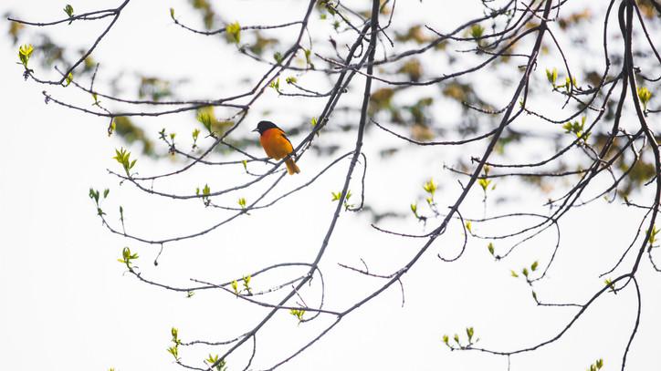 Már a madárdal sem a régi: ezért változik a szárnyasok éneke