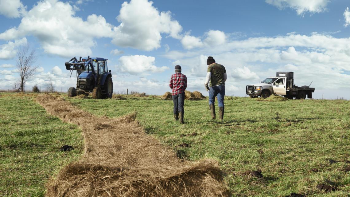 Szorult helyzetben a kistermelők: ezért számolják fel sorra a családi gazdaságukat