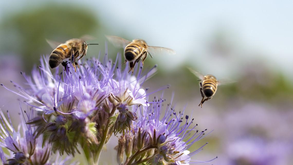 Apokalipszisre figyelmeztetnek a méhészek: sürgősen változtatni kéne